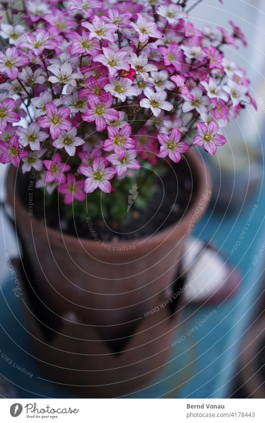 garden jewellery Flower pretty purple Violet Garden at home Blossom Spring Pot plant cheerful Growth out Colour photo Jewellery Love care bokeh