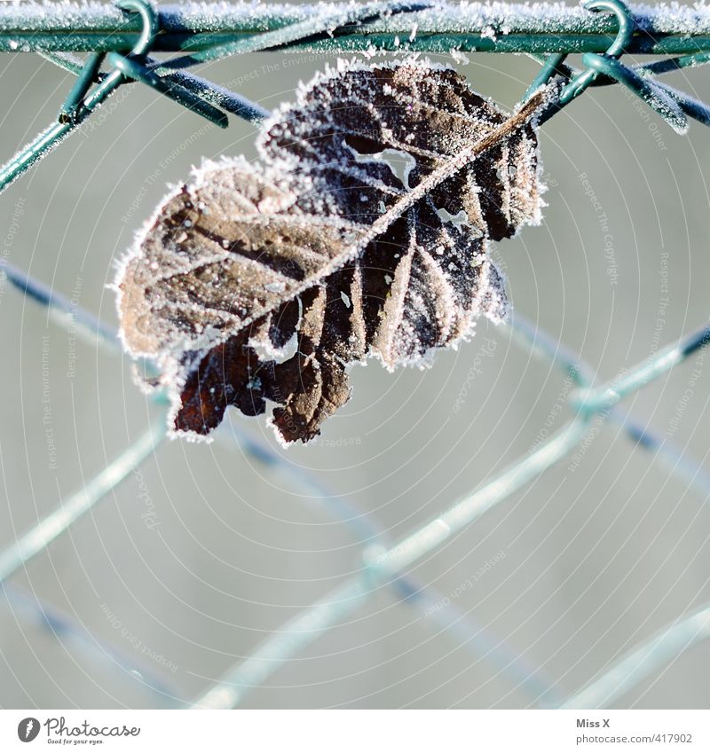 leaf Winter Weather Ice Frost Snow Leaf Cold Hoar frost Garden Garden fence Transience Autumnal weather Winter's day Rachis Frozen Colour photo Subdued colour