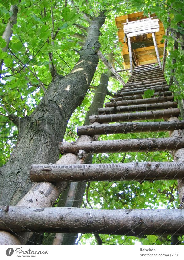 ladder to heaven Tree Hunting Blind Green Forest Wood Ladder