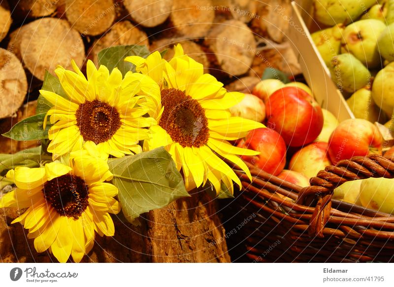harvest Autumn Sunflower Leaf Thanksgiving Basket Wood Harvest Apple gifts Autumnal Garden Fruit Summer
