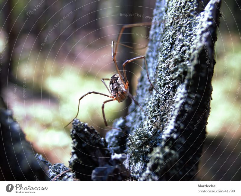 Nature Forest Insect Spider Spider's web