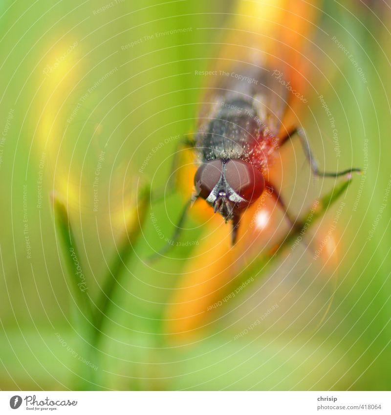 Nature Green Plant Landscape Animal Black Environment Eyes Grass Garden Legs Flying Orange Sit Wild animal