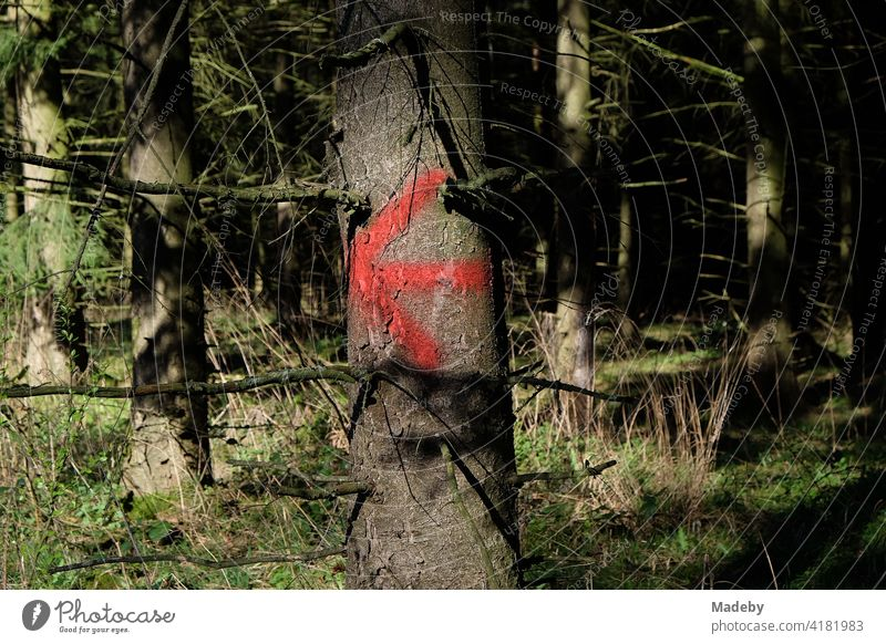 Red arrow on a tree trunk in the sunshine on a hiking trail through the Teutoburg Forest in Oerlinghausen near Bielefeld in East Westphalia-Lippe Arrow