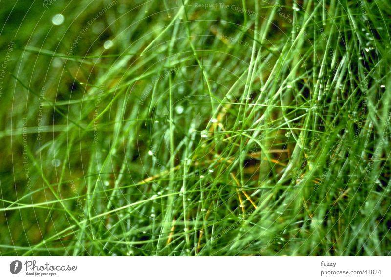 grass Grass Dew
