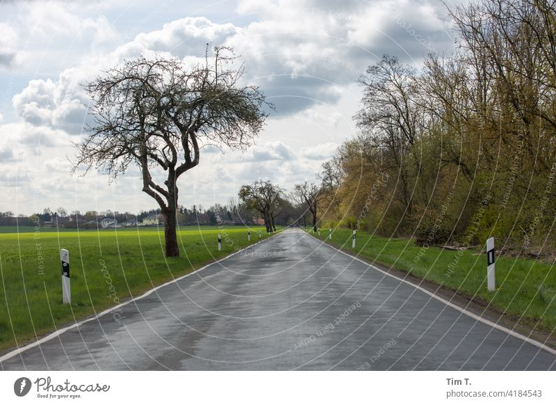 a country road in spring Brandenburg Country road Street Avenue Tree Lanes & trails Exterior shot Nature Landscape Traffic infrastructure Deserted Colour photo