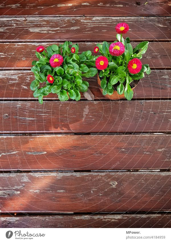 Spring on the table Table Spring flower Pot plant Wood Wooden table Deserted Colour photo Exterior shot Plant slats worn-out Flower Decoration Bouquet