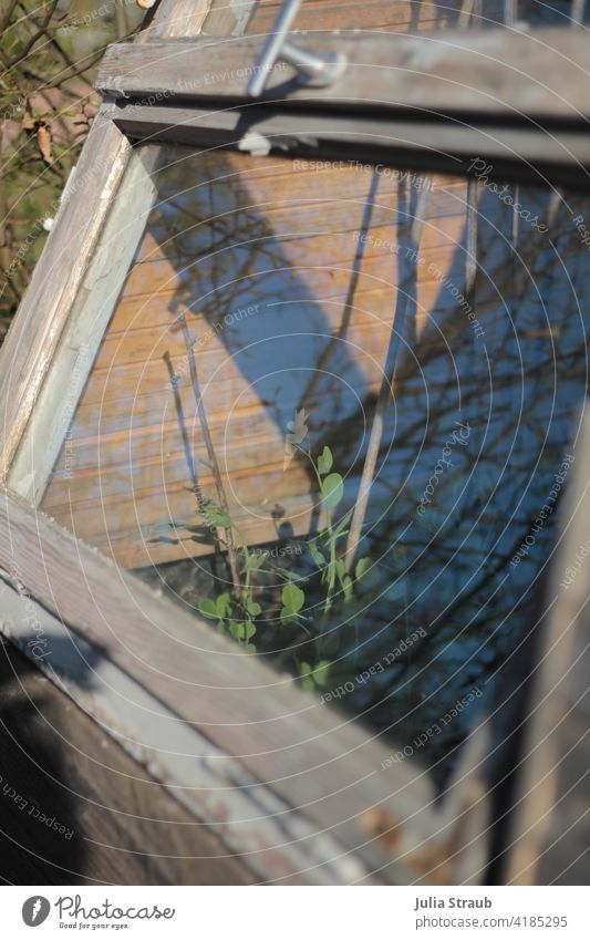 Raised bed with self-made roof from old windows Recycling upcycling Window pane Wooden window White spieglung Garden Peas Bamboo stick Climbing aid