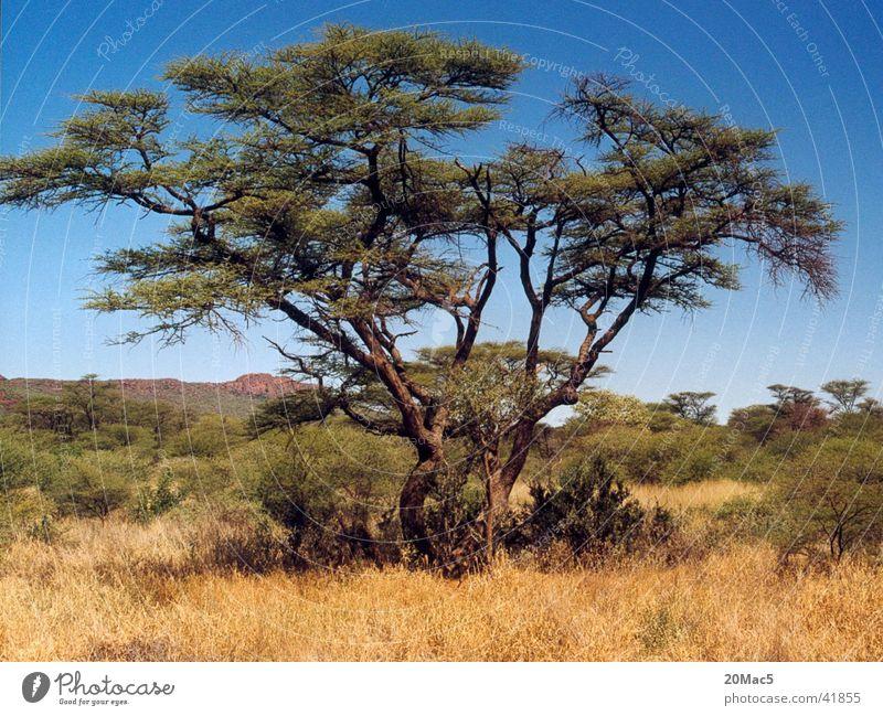 Tree Desert