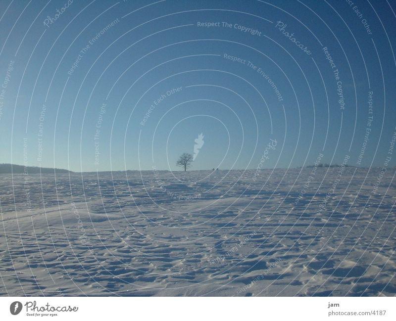 winter atmosphere Winter Horizon Tree Snow