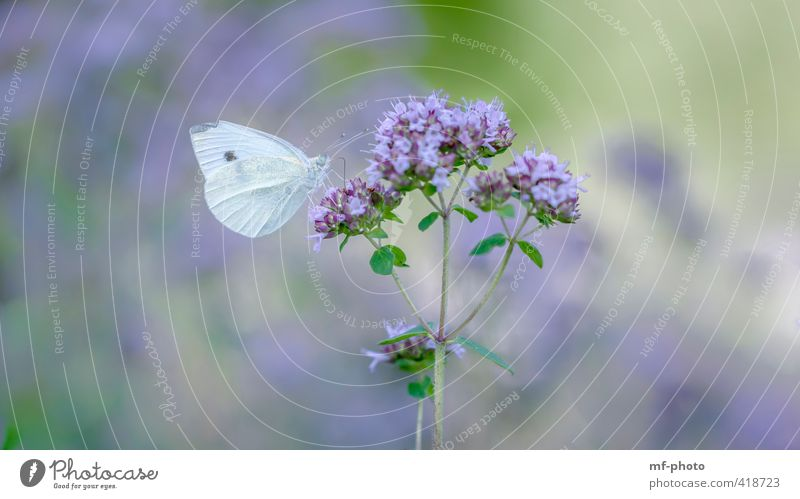 Nature Blue Beautiful Green White Plant Summer Animal Garden Violet Butterfly