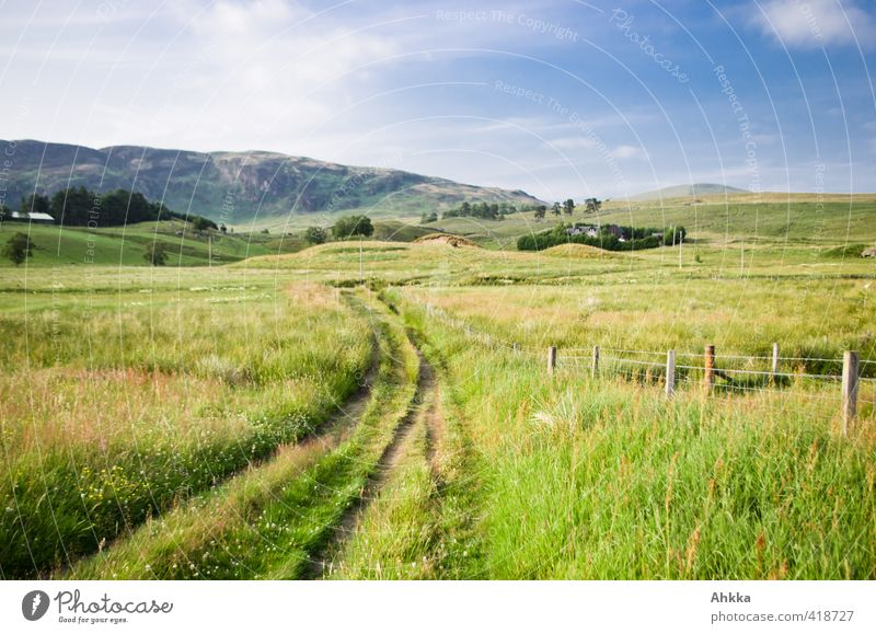 Green meadow landscape in summery Scotland, country lane Life Harmonious Senses Calm Meditation Vacation & Travel Adventure Far-off places Freedom Summer Hiking