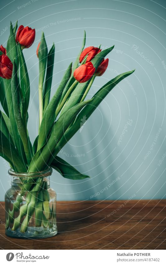 Bbouquet of red tulips Tulip Tulip blossom Blossom Blossoming Spring Colour photo Interior shot Vase Bouquet Decoration still life Flower Orange Red Day