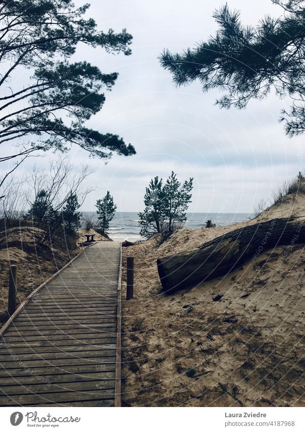 Wooden beachside pathway leading to the beach Beach Beach path Sand Sandy beach pine tree pine trees Tree Pine sea Baltic Sea Baltic coast Baltic Sea holiday