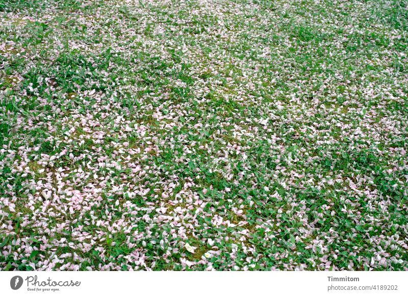 Here rests a lot of petals Meadow Pink Green blossom Faded Spring Nature