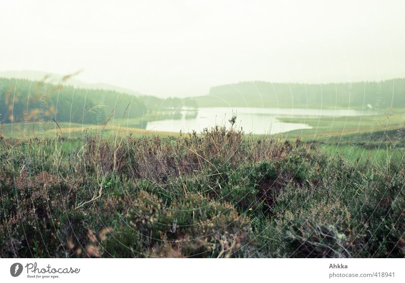 Scottish moorland with lake Vacation & Travel Adventure Far-off places Nature Landscape Plant Animal Bad weather Rain Bushes Mountain Lake Observe Think