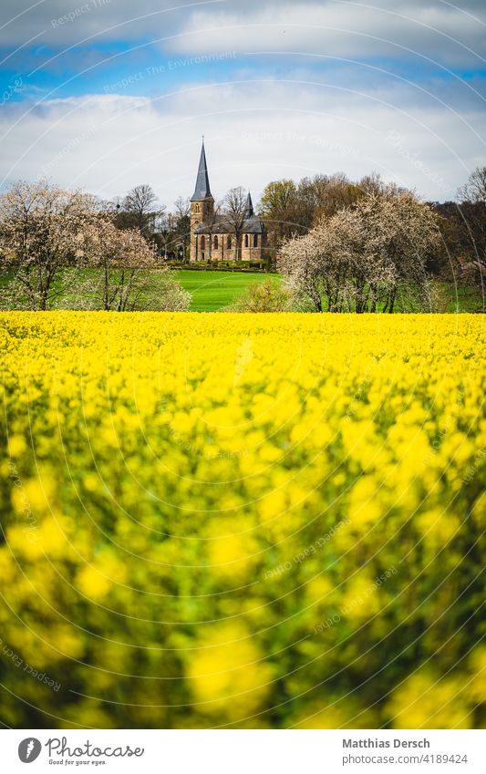 The church behind the rape field Church Canola Canola field Oilseed rape flower Oilseed rape cultivation Church spire Landscapes Field Yellow Agriculture