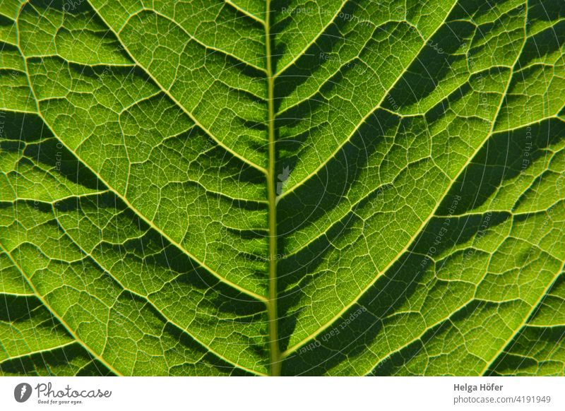 Green leaf Leaf Rachis Plant Leaf green Growth Structures and shapes Close-up Detail Nature Foliage plant Environment Pattern Light