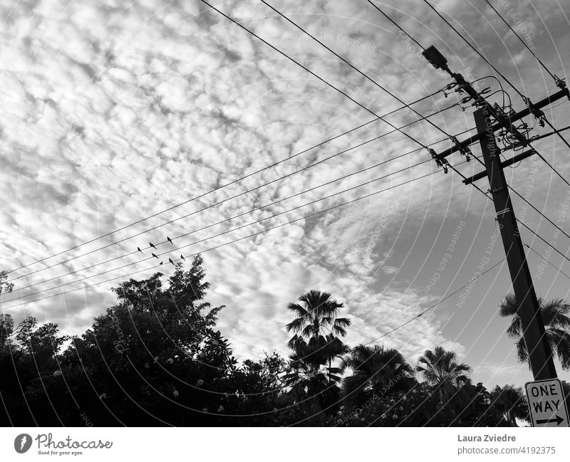 Birds on the power line in tropics birds High voltage power line Energy industry Electricity Technology Cable Power transmission high voltage Transmission lines