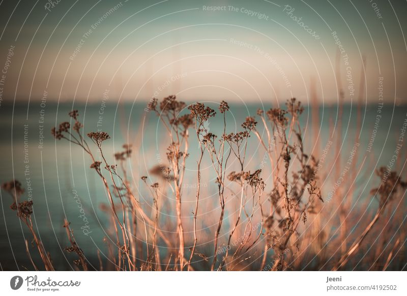 Plants by the wayside in the sunshine with a gauzy blue background of sky and sea plants Lanes & trails Sunlight gossamer Delicate pale blue Sky Ocean