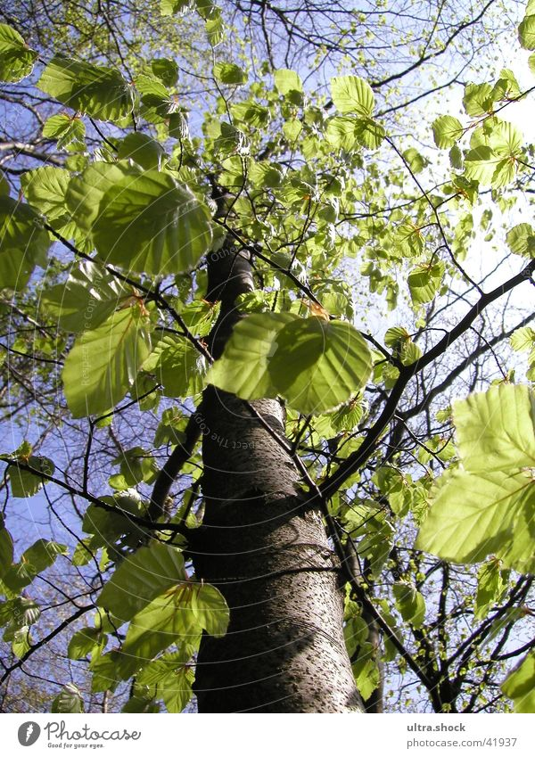 Sky Tree Green Leaf