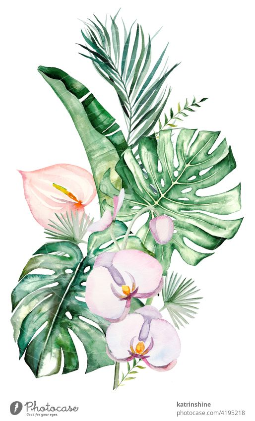 Watercolor tropical flowers and leaves bouquet illustration watercolor orchids anturium pink blush palm monstera fern banana Drawing green paper Botanical Leaf