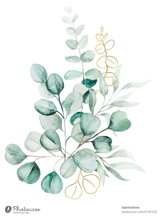 Watercolor eucaliptus leaves bouquet illustration watercolor branch Drawing green golden Botanical Leaf exotic Hand drawn Ornament Plant Foliage Paint Isolated