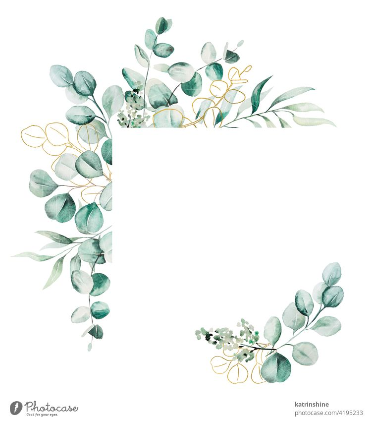 Watercolor eucaliptus leaves frame illustration watercolor branch wreath Drawing green geometric square golden copy space paper Botanical Leaf exotic Hand drawn