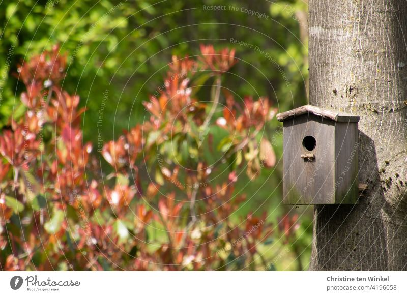 """A wooden nesting box hangs on the trunk of a walnut tree. Sunshine with light and shadow, in the background a glossy medlar """"Red Robin"""" with freshly sprouted red leaves."""