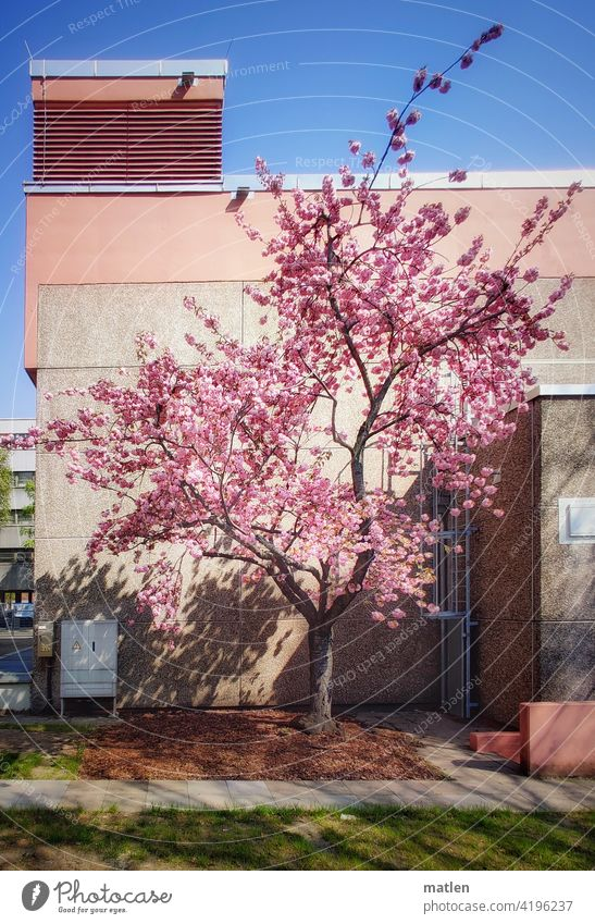 tone-in-tone tree blossom Wall (building) Industrial construction Factory site Meadow Exterior shot Deserted
