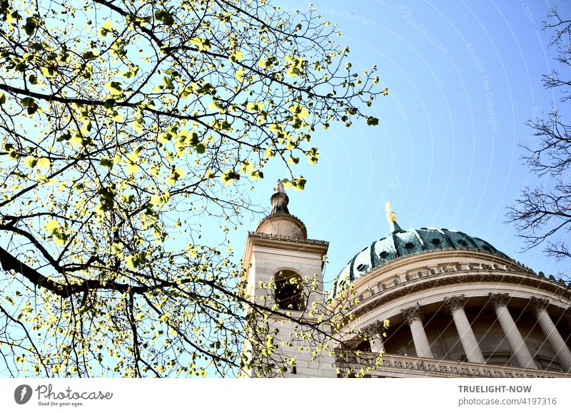 The first tender green leaves on the branches enliven the view from below of the tambour dome and one of the four corner towers of the listed church of St. Nikolai in Potsdam against a pale blue sky in springtime