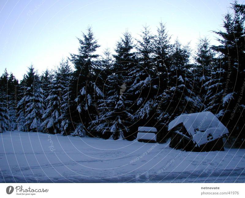 WINTER I Winter Tree Light Snow