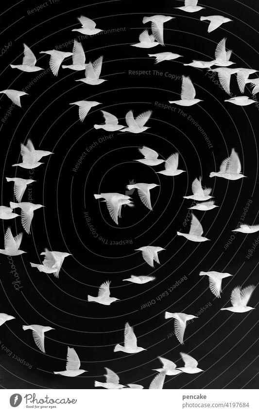 objektiv | negativ Film analog Belichtung belichtet Negativ schwarz-weß Fotografie Vogel Schwarm Vogelschwarm Star Photo