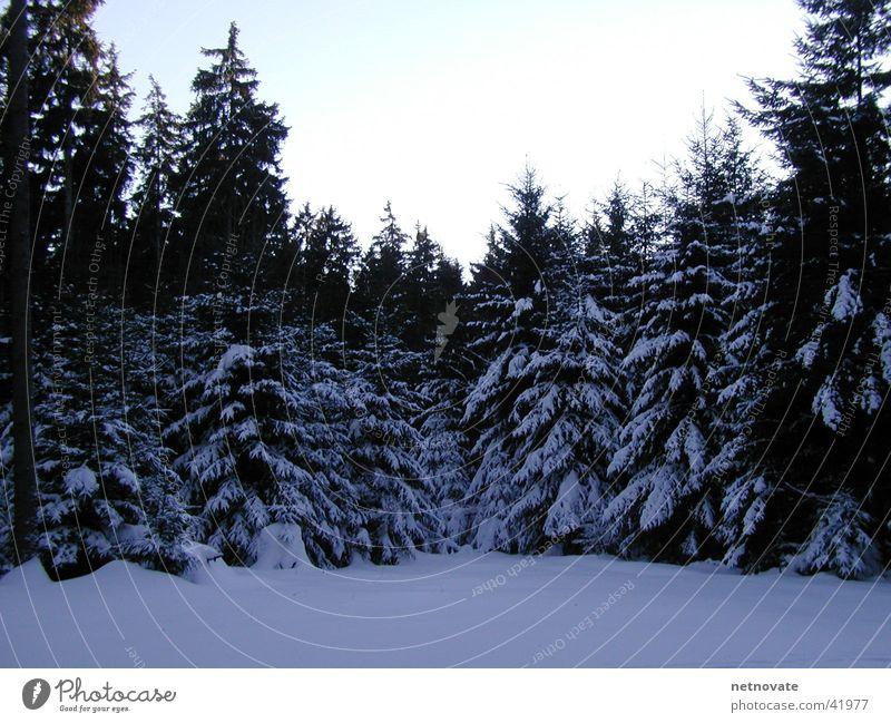 WINTER II Winter Tree Light Snow