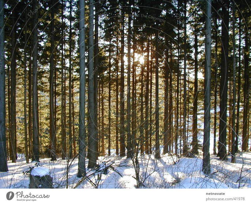 WINTER III Winter Tree Light Snow