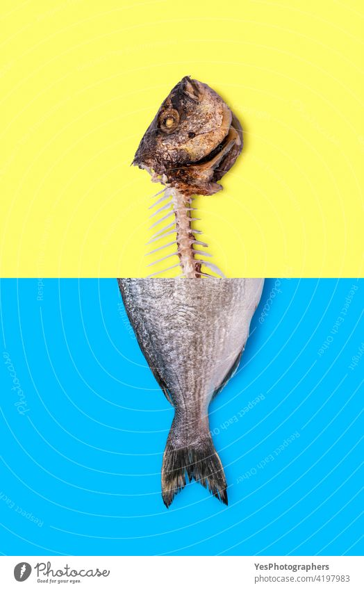 Eating fish concept. Raw fish and fish skeleton photomontage. above animal background bicolor blue bones change climate change collage copy space crisis cut out