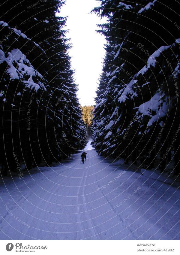 winter Winter Tree Light Snow