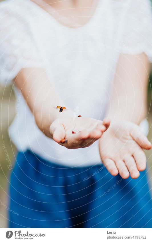 Beautiful little insects. macro photography Nature Ladybug Spring wildlife Girl girl's hands tenderness spring mood happy child walk children's hands