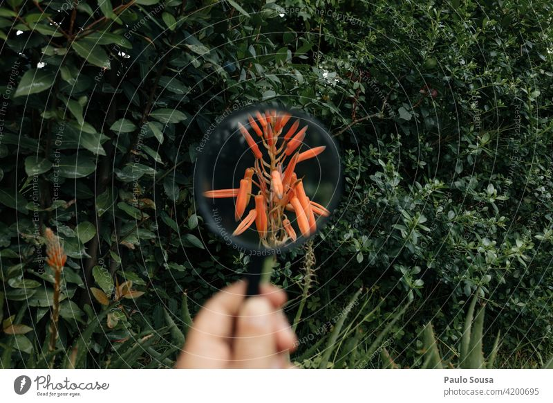Flower through magnifying glass Hand holding Magnifying glass Nature Colour photo Magnifying effect Observe Enlarged Close-up Detail Curiosity