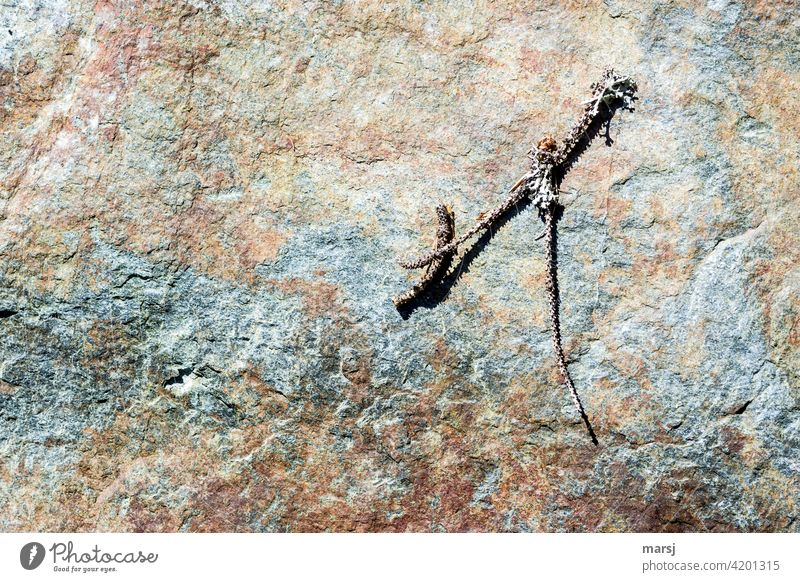 Little branch with lichen taking a sunbath on a colorful stone. Stone rock Structures and shapes Branch Lie strange Simple naturally Abstract