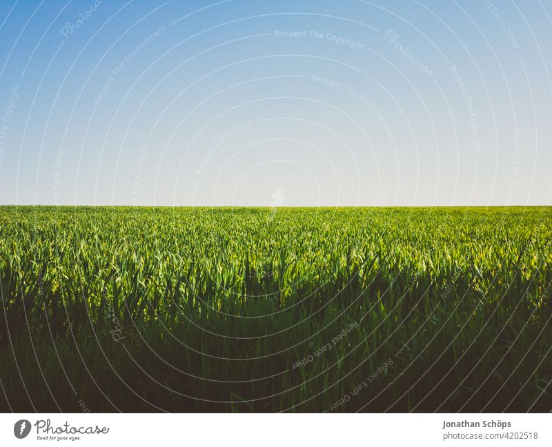 green field and blue sky idyll in sunshine Growth Landscape Agricultural crop Colour photo Blue Exterior shot Environment Nature sunny out Blue sky Summer Sky