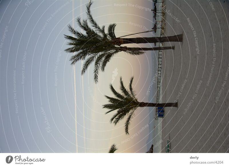 Palm trees on the beach Majorca Beach