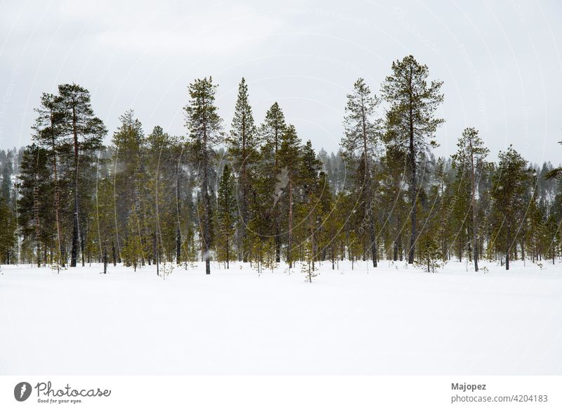 Beautiful and relaxing landscape. Snowing in a forest in Lapland, Finland, Europe frozen natural weather park season wood ice trees scene beautiful background