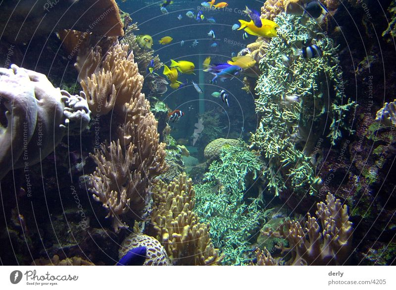 Underwater photo Transport Fish Zoo