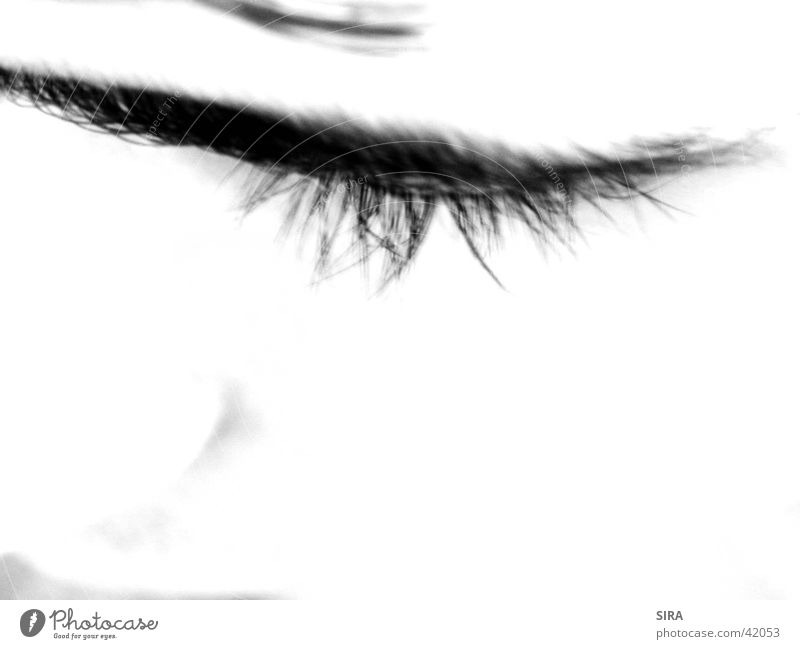 Human being Eyes Eyelash