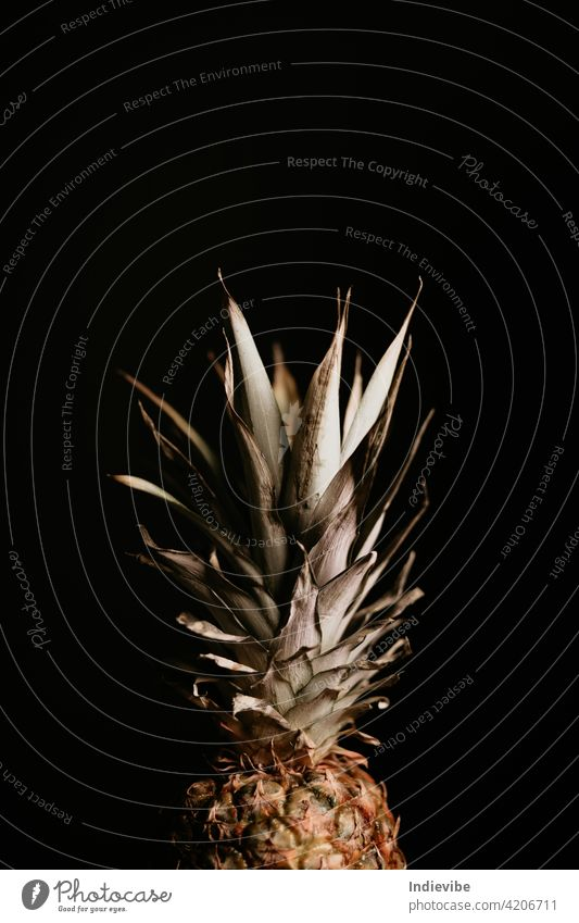 Dried pineapple leaves on black background. Harsh shadows, dramatic view, lots of details. dark isolated fruit food tropical fresh sweet ripe healthy ananas