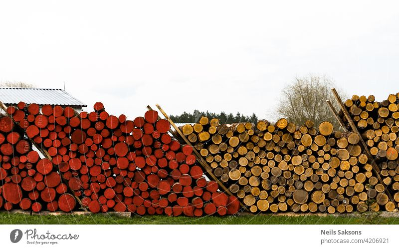Timber logging in forest. Freshly cut tree wooden logs piled up. Wood storage for industry. Yellow and red logs nature green sky market agriculture field