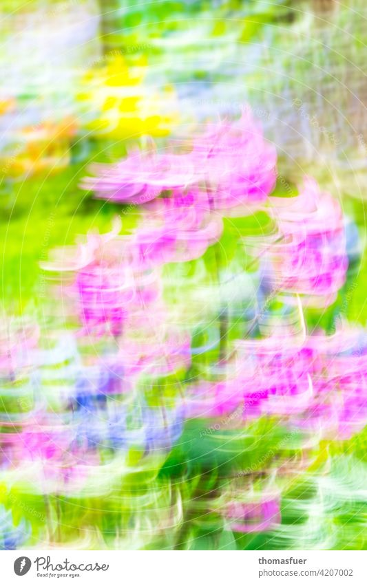 very colorful spring flowers dynamically alienated blossoms Spring Colour Abstract Dynamics Bright optimistic Garden hysterically