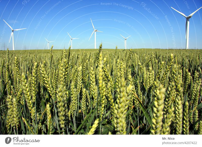 wind farm Agriculture Field Green Wind energy plant Summer Nature Sky Maturing time Energy industry Growth Grain Ear of corn Grain field Far-off places Pinwheel