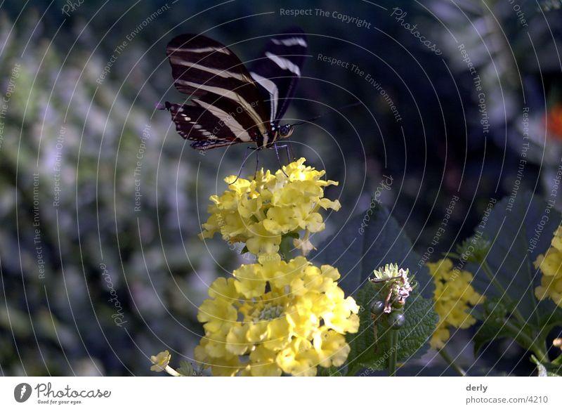 butterfly Butterfly Flower