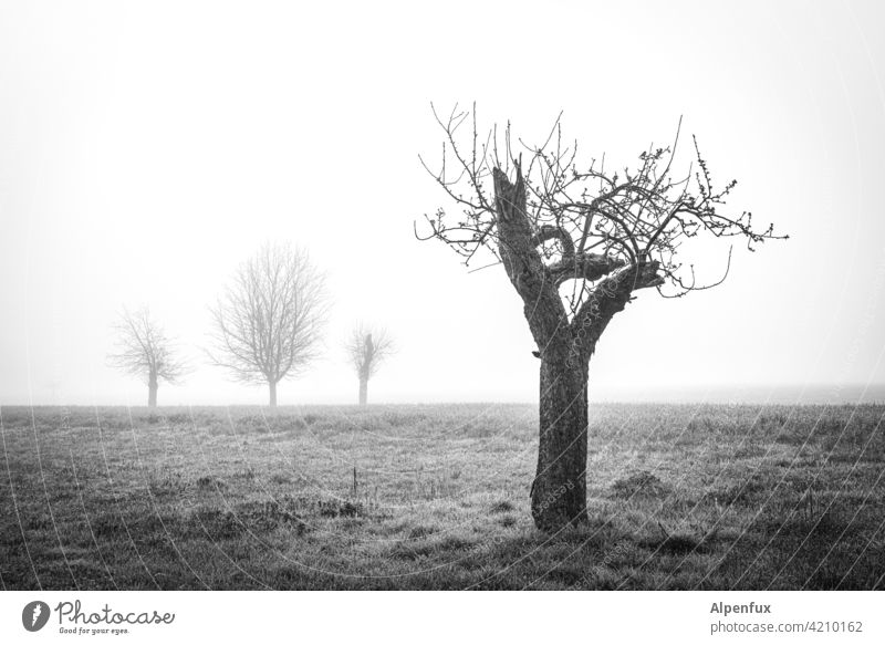 On the edge of society Tree bare tree Fog Landscape Autumn Moody on one's own unattached by oneself Loneliness silent Exterior shot Cold Calm Environment